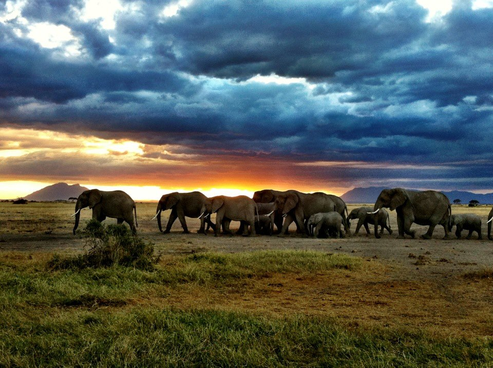 Elephants on the plains of Kenya. Picture: Angela Saurine